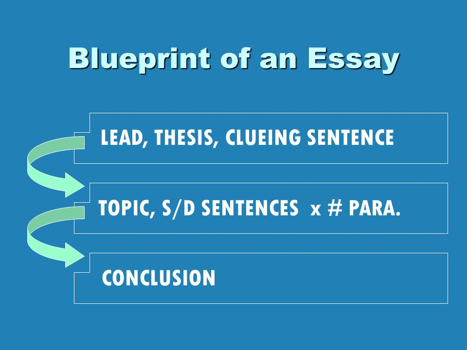 Blueprint of an Essay LEAD, THESIS, CLUEING SENTENCE TOPIC, S/D SENTENCES x # PARA. CONCLUSION