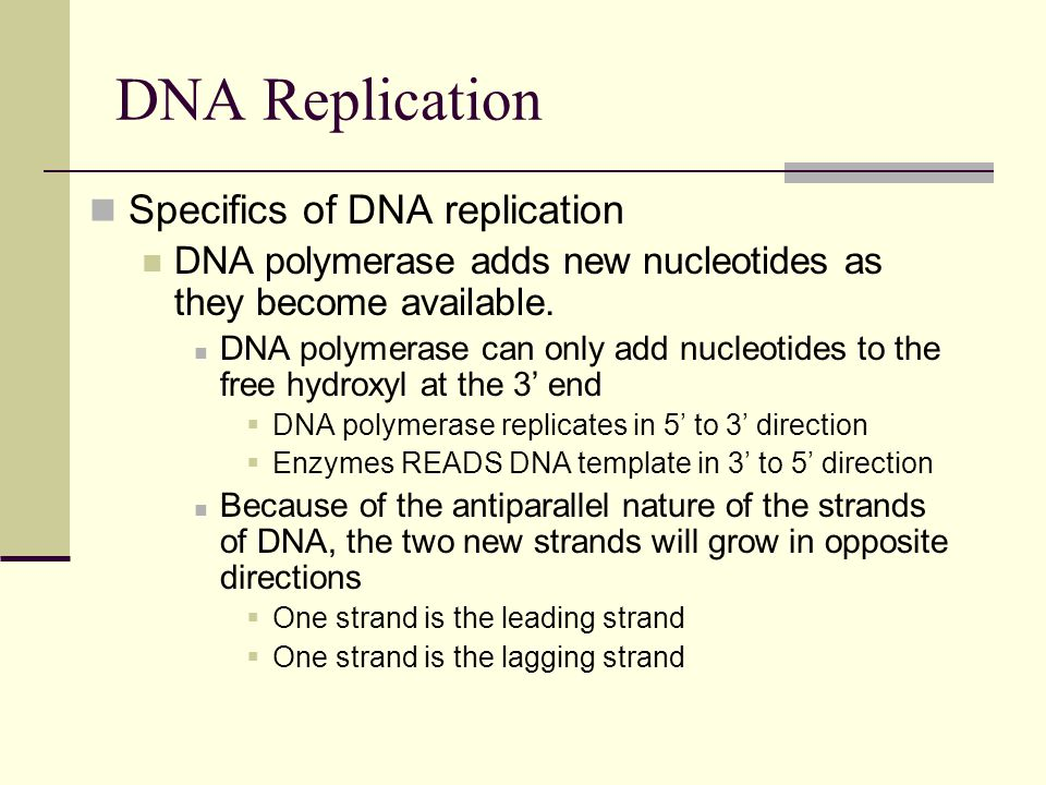 DNA Replication Specifics of DNA replication DNA polymerase adds new nucleotides as they become available.