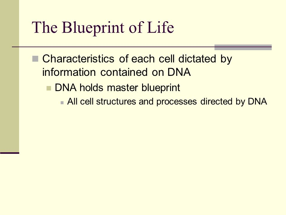 The Blueprint of Life Characteristics of each cell dictated by information contained on DNA DNA holds master blueprint All cell structures and processes directed by DNA