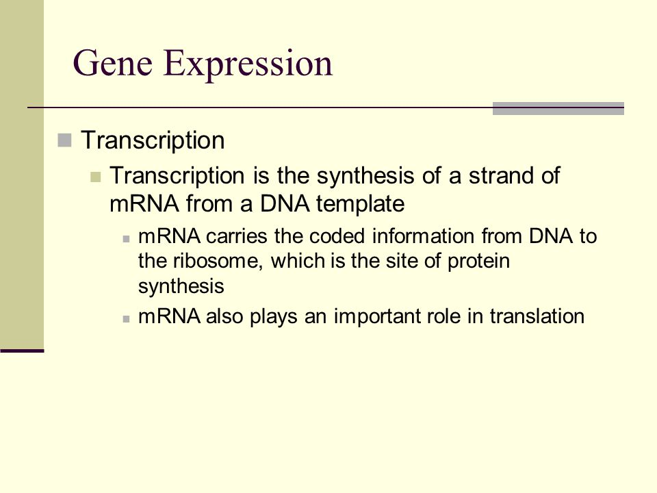 Gene Expression Transcription Transcription is the synthesis of a strand of mRNA from a DNA template mRNA carries the coded information from DNA to the ribosome, which is the site of protein synthesis mRNA also plays an important role in translation