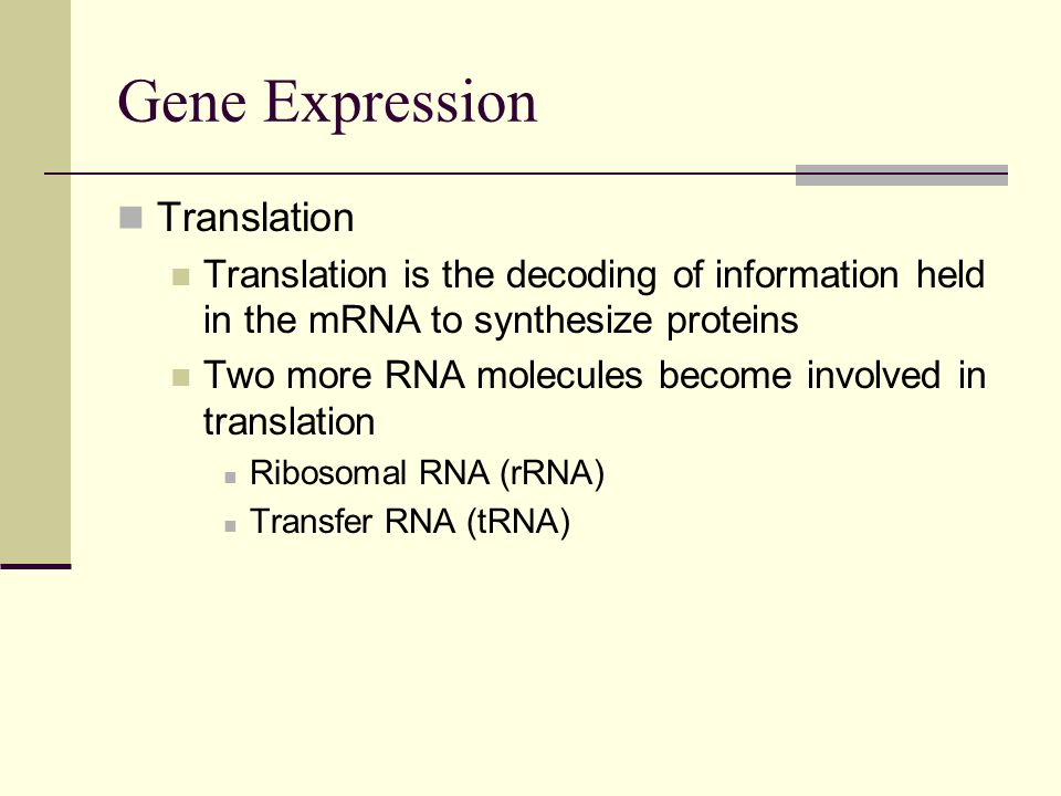 Gene Expression Translation Translation is the decoding of information held in the mRNA to synthesize proteins Two more RNA molecules become involved in translation Ribosomal RNA (rRNA) Transfer RNA (tRNA)