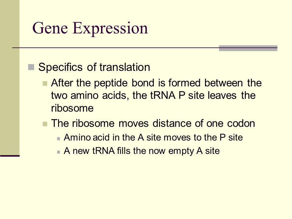 Gene Expression Specifics of translation After the peptide bond is formed between the two amino acids, the tRNA P site leaves the ribosome The ribosome moves distance of one codon Amino acid in the A site moves to the P site A new tRNA fills the now empty A site
