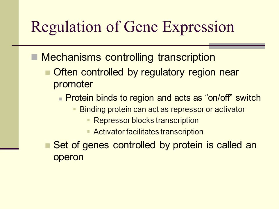 Mechanisms controlling transcription Often controlled by regulatory region near promoter Protein binds to region and acts as on/off switch  Binding protein can act as repressor or activator  Repressor blocks transcription  Activator facilitates transcription Set of genes controlled by protein is called an operon Regulation of Gene Expression