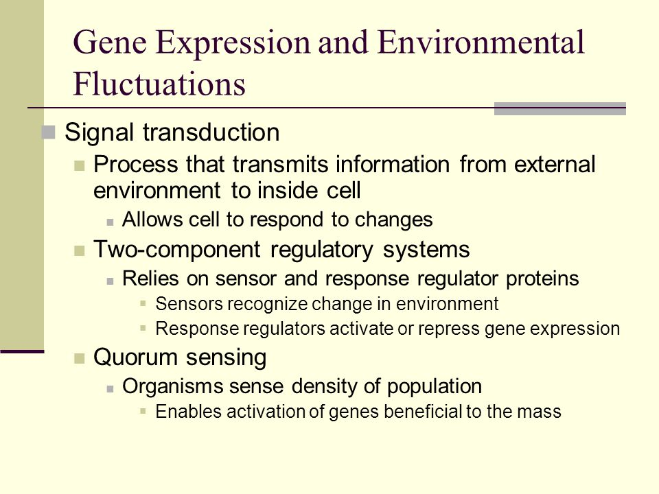 Signal transduction Process that transmits information from external environment to inside cell Allows cell to respond to changes Two-component regulatory systems Relies on sensor and response regulator proteins  Sensors recognize change in environment  Response regulators activate or repress gene expression Quorum sensing Organisms sense density of population  Enables activation of genes beneficial to the mass Gene Expression and Environmental Fluctuations