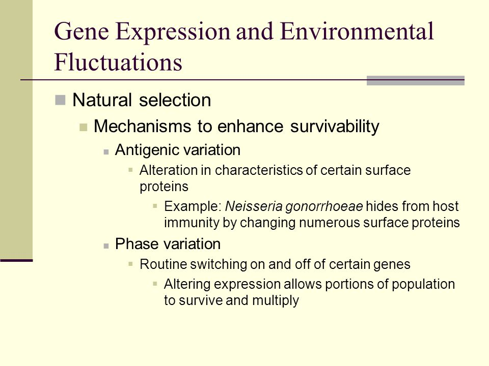 Natural selection Mechanisms to enhance survivability Antigenic variation  Alteration in characteristics of certain surface proteins  Example: Neisseria gonorrhoeae hides from host immunity by changing numerous surface proteins Phase variation  Routine switching on and off of certain genes  Altering expression allows portions of population to survive and multiply Gene Expression and Environmental Fluctuations