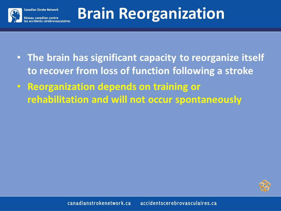 Brain Reorganization The brain has significant capacity to reorganize itself to recover from loss of function following a stroke Reorganization depends on training or rehabilitation and will not occur spontaneously