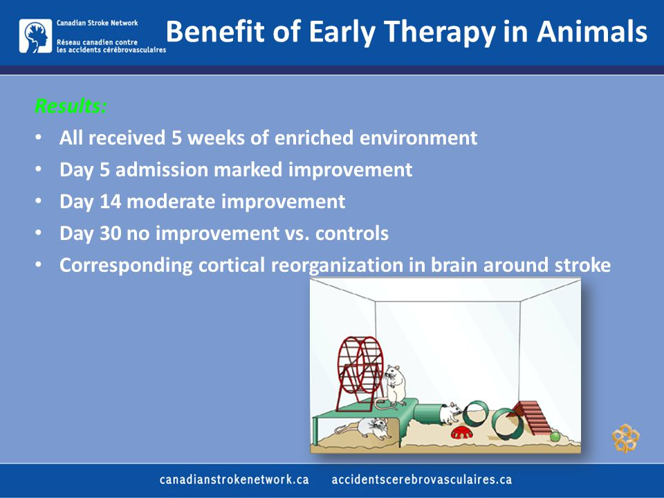 Benefit of Early Therapy in Animals Results: All received 5 weeks of enriched environment Day 5 admission marked improvement Day 14 moderate improvement Day 30 no improvement vs.