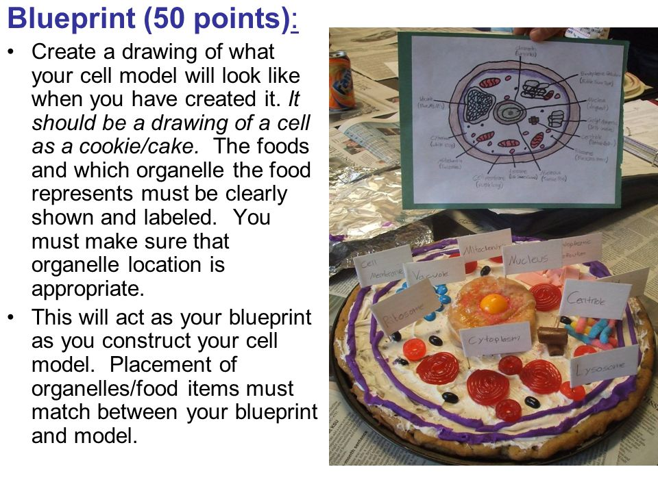 Blueprint (50 points): Create a drawing of what your cell model will look like when you have created it. It should be a drawing of a cell as a cookie/