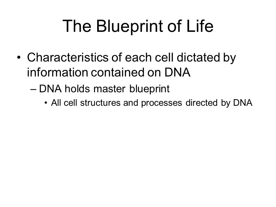 Prokaryotic Gene Regulation DNA-binding proteins repressor binds, blocking transcription activator binds, facilitating transcription (negative control) (positive control) Activity of activators/repressors can be controlled