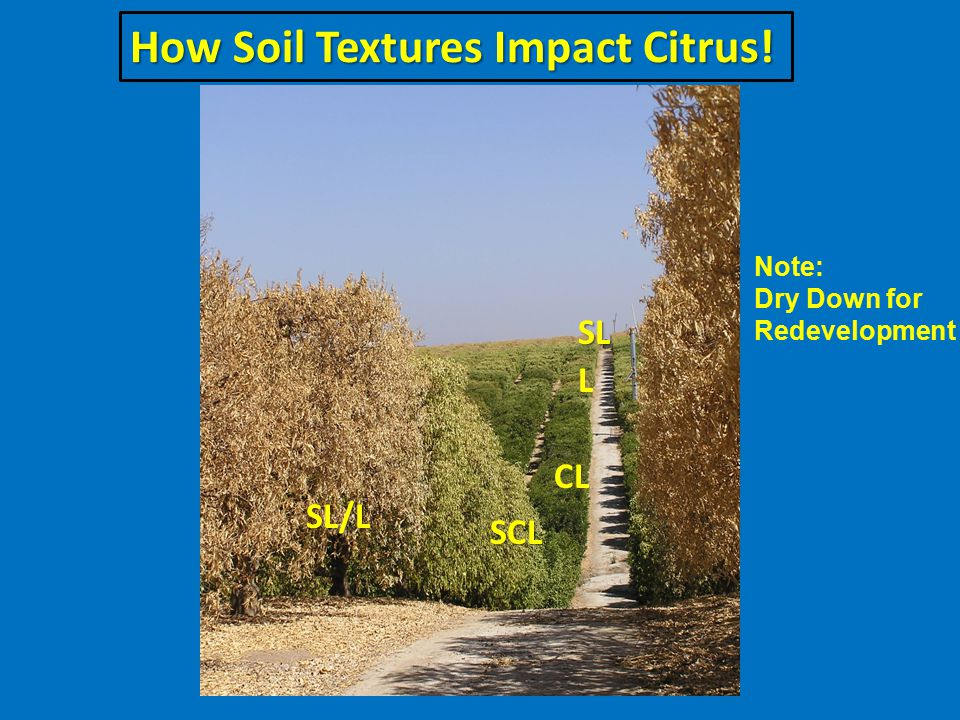 How Soil Textures Impact Citrus! Note: Dry Down for Redevelopment SL/L SCL CL L SL