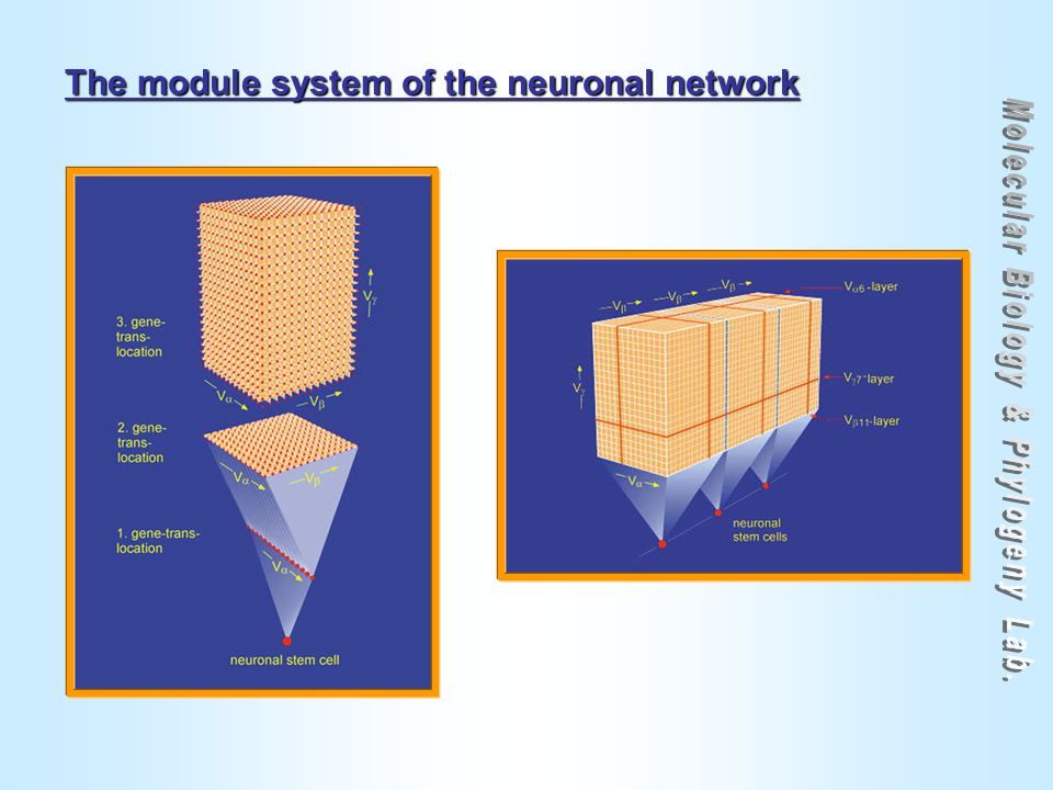 The module system of the neuronal network