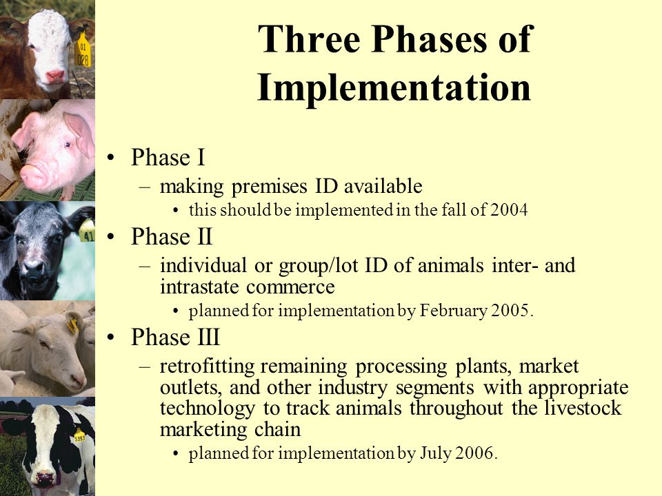 Three Phases of Implementation Phase I –making premises ID available this should be implemented in the fall of 2004 Phase II –individual or group/lot ID of animals inter- and intrastate commerce planned for implementation by February 2005.