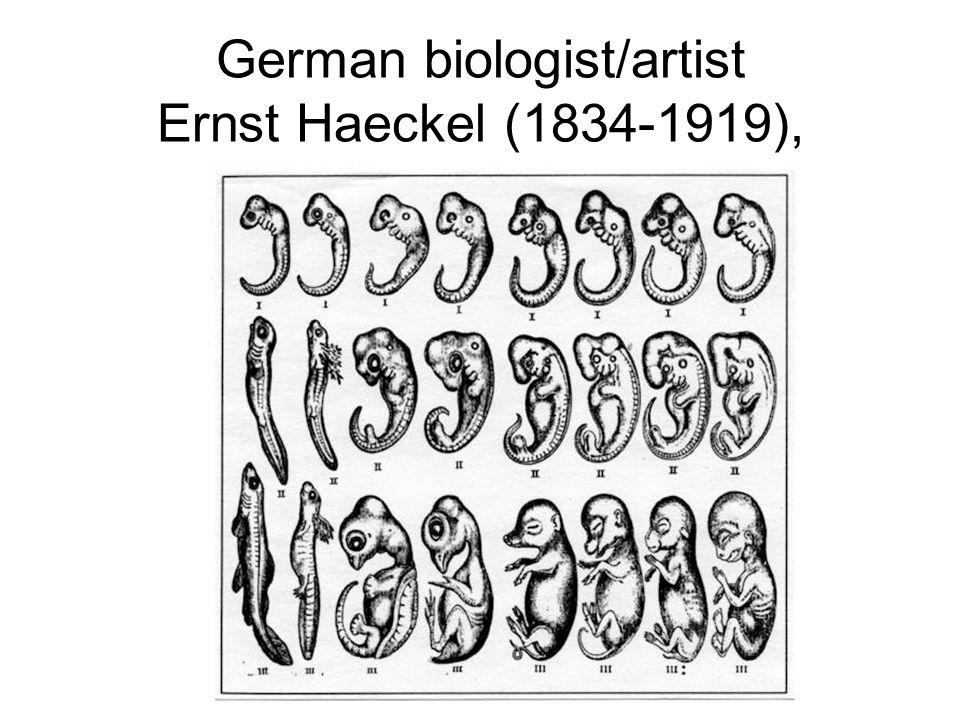 German biologist/artist Ernst Haeckel (1834-1919),