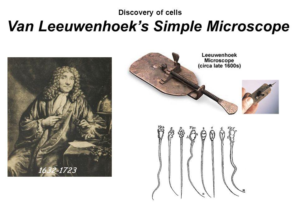 Discovery of cells Van Leeuwenhoek's Simple Microscope 1632-1723