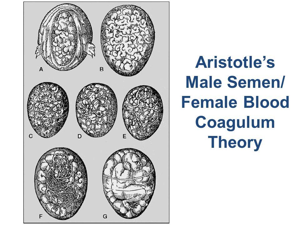 Aristotle's Male Semen/ Female Blood Coagulum Theory