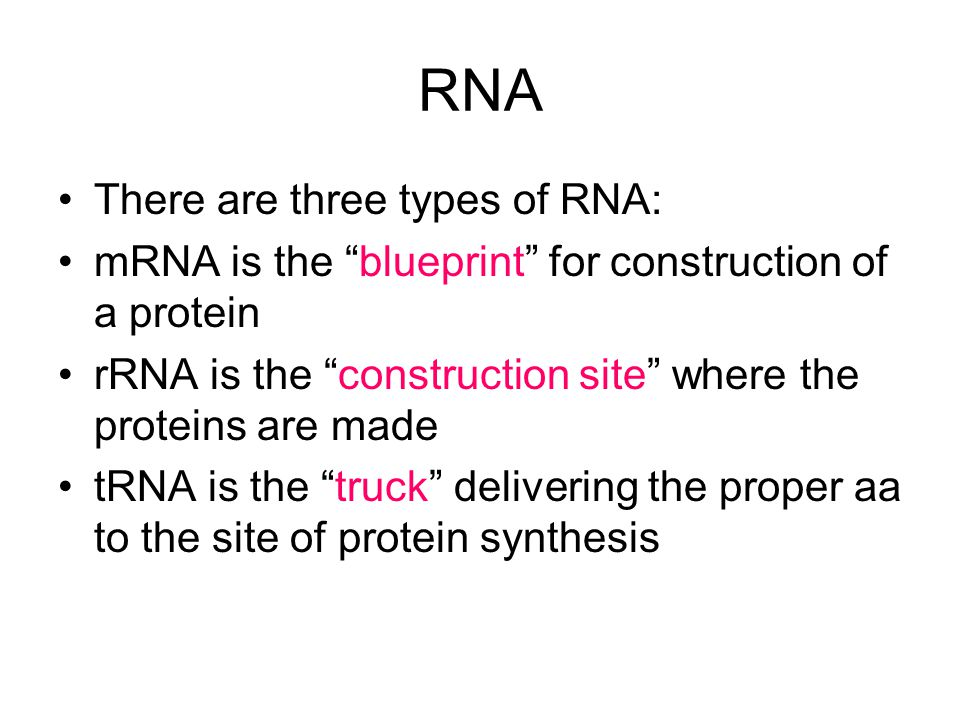 RNA There are three types of RNA: mRNA is the blueprint for construction of a protein rRNA is the construction site where the proteins are made tRNA is the truck delivering the proper aa to the site of protein synthesis