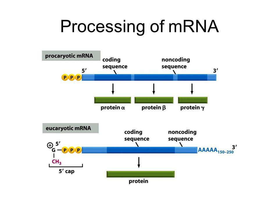 Processing of mRNA