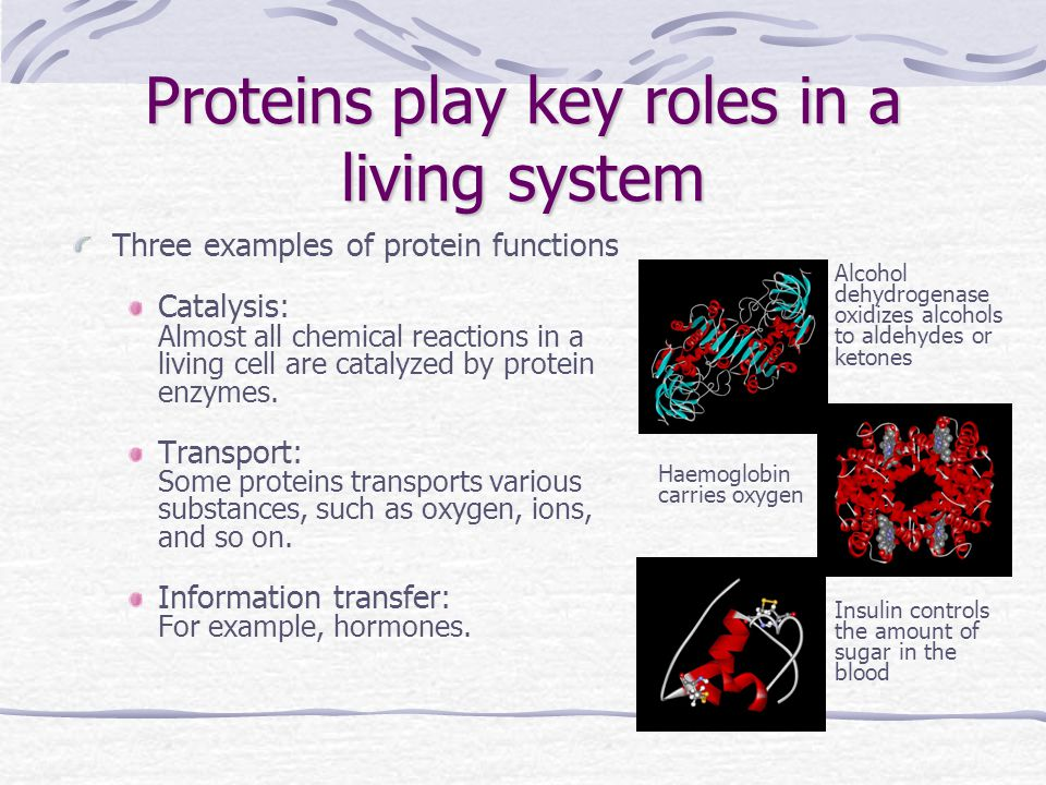 Proteins play key roles in a living system Three examples of protein functions Catalysis: Almost all chemical reactions in a living cell are catalyzed by protein enzymes.