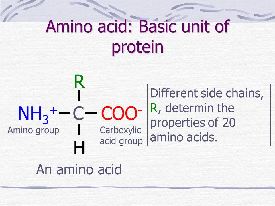 Amino acid: Basic unit of protein COO - NH 3 + C R H An amino acid Different side chains, R, determin the properties of 20 amino acids.