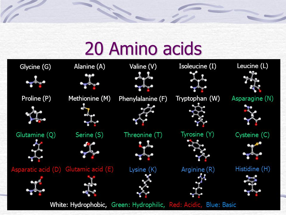 20 Amino acids Glycine (G) Glutamic acid (E) Asparatic acid (D) Methionine (M) Threonine (T) Serine (S) Glutamine (Q) Asparagine (N) Tryptophan (W) Ph