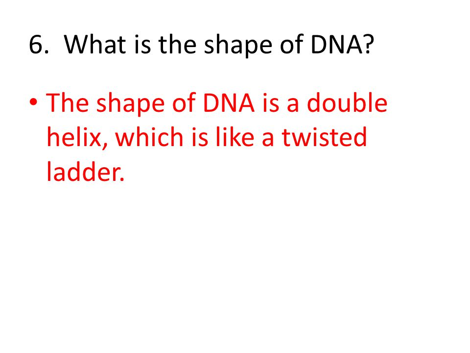 6. What is the shape of DNA? The shape of DNA is a double helix, which is like a twisted ladder.