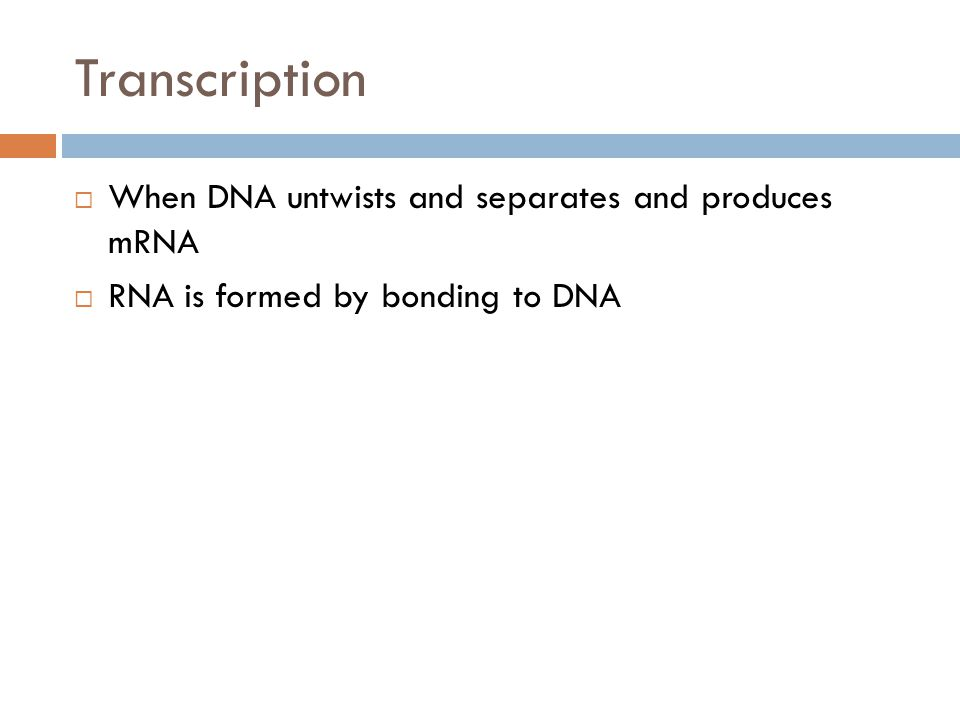 Transcription  When DNA untwists and separates and produces mRNA  RNA is formed by bonding to DNA