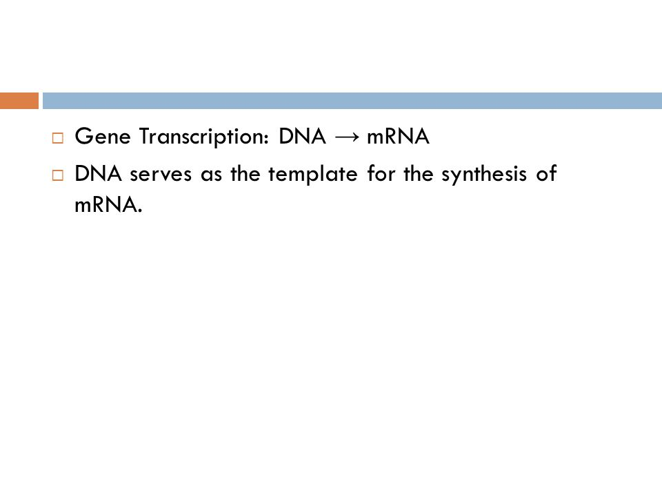  Gene Transcription: DNA → mRNA  DNA serves as the template for the synthesis of mRNA.
