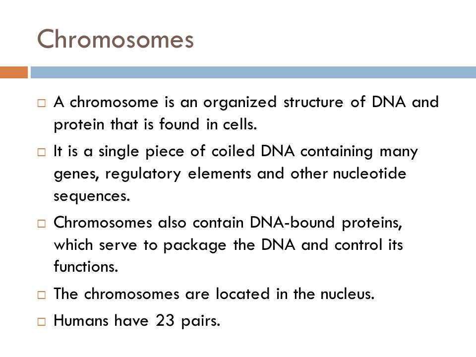 Translation  Translation - Proteins are made from the message on the RNA DNAmRNAtRNA Transcription Translation