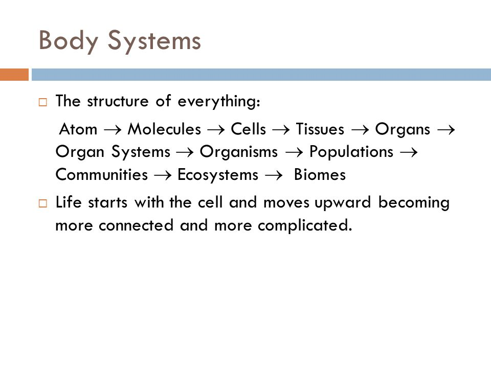 Body Systems  The structure of everything: Atom  Molecules  Cells  Tissues  Organs  Organ Systems  Organisms  Populations  Communities  Ecos