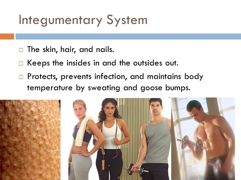 Integumentary System  The skin, hair, and nails.  Keeps the insides in and the outsides out.  Protects, prevents infection, and maintains body temp
