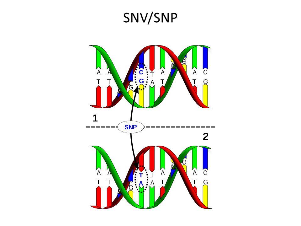 SNV/SNP