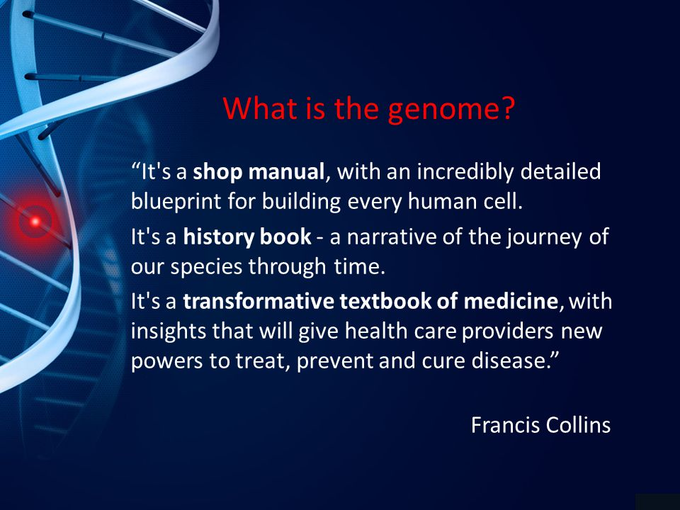 What is the genome.