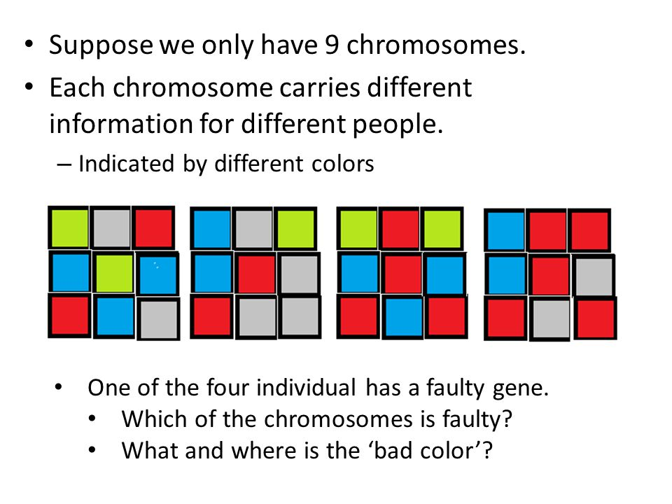 Suppose we only have 9 chromosomes. Each chromosome carries different information for different people. – Indicated by different colors One of the fou