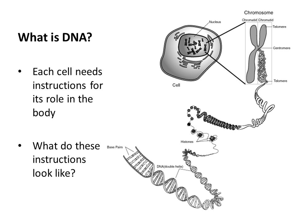 The instructions come in the form of a molecule called DNA.