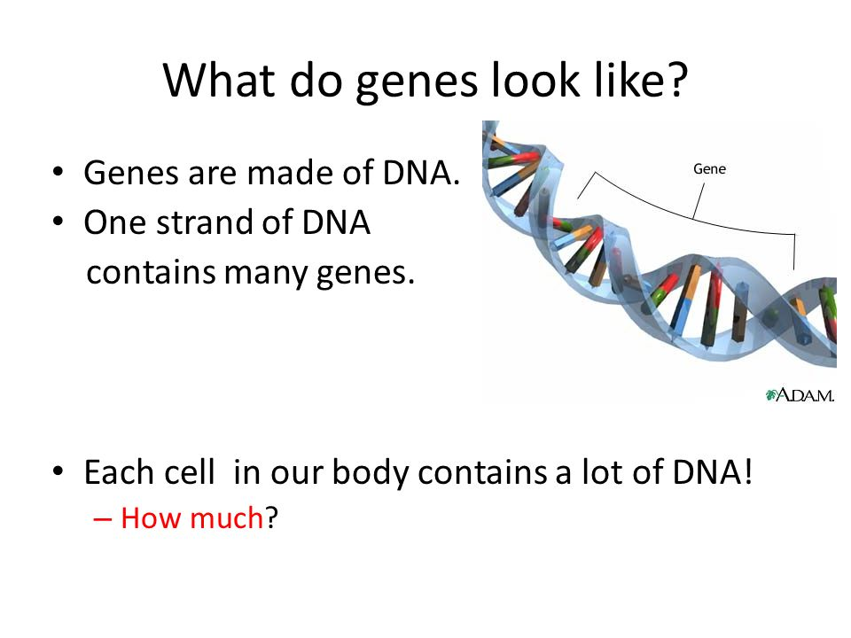 Suppose we only have 9 chromosomes.
