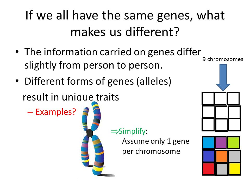 If we all have the same genes, what makes us different? The information carried on genes differ slightly from person to person. Different forms of gen