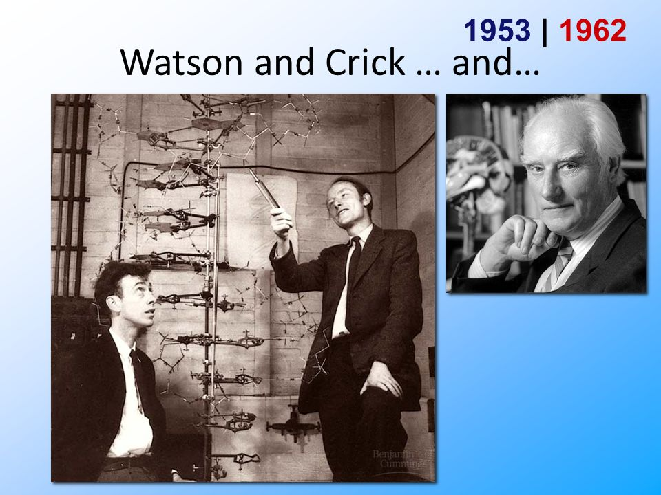 DNA replication It has not escaped our notice that the specific pairing we have postulated immediately suggests a possible copying mechanism for the genetic material. - James Watson & Francis Crick (1953)