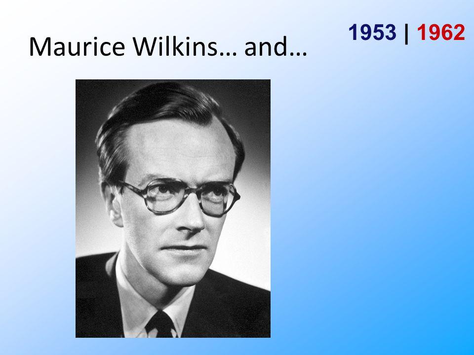 Watson and Crick … and… 1953 | 1962