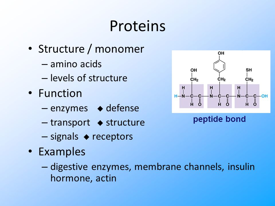 Lipids Structure / building block – glycerol, fatty acid, cholesterol, H-C chains Function – energy storage – membranes – hormones Examples – fat, phospholipids, steroids ester bond (in a fat)