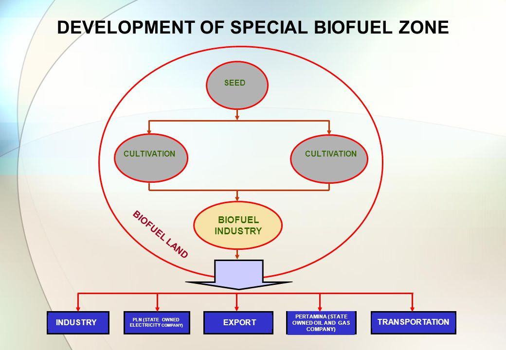 DEVELOPMENT OF SPECIAL BIOFUEL ZONE SEED CULTIVATION INDUSTRY PLN (STATE OWNED ELECTRICITY COMPANY) EXPORT PERTAMINA (STATE OWNED OIL AND GAS COMPANY) TRANSPORTATION BIOFUEL LAND BIOFUEL INDUSTRY