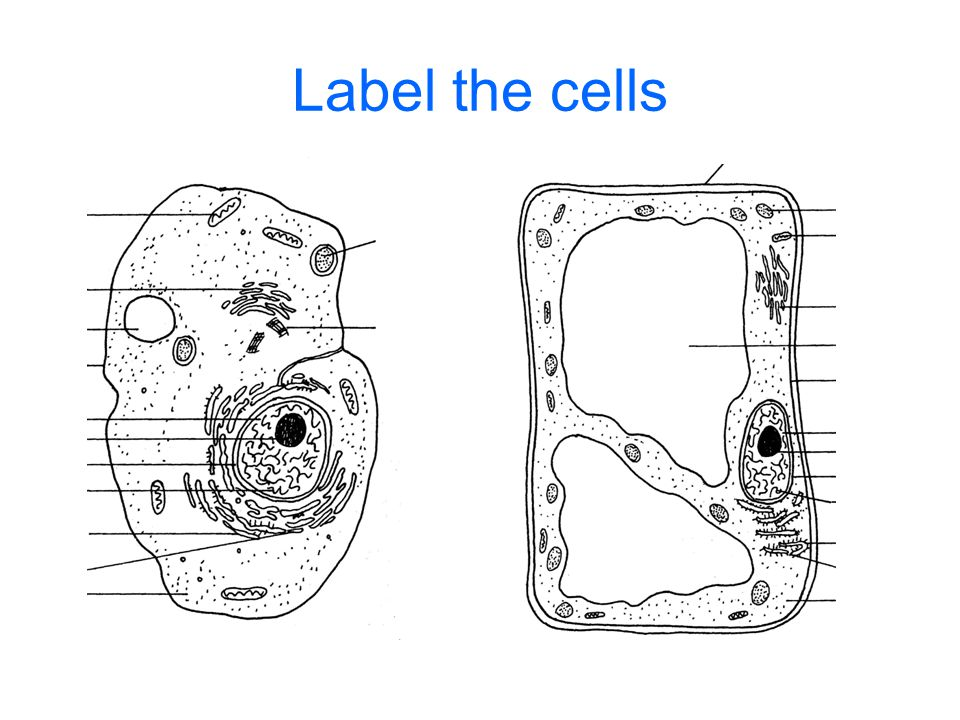 Label the cells
