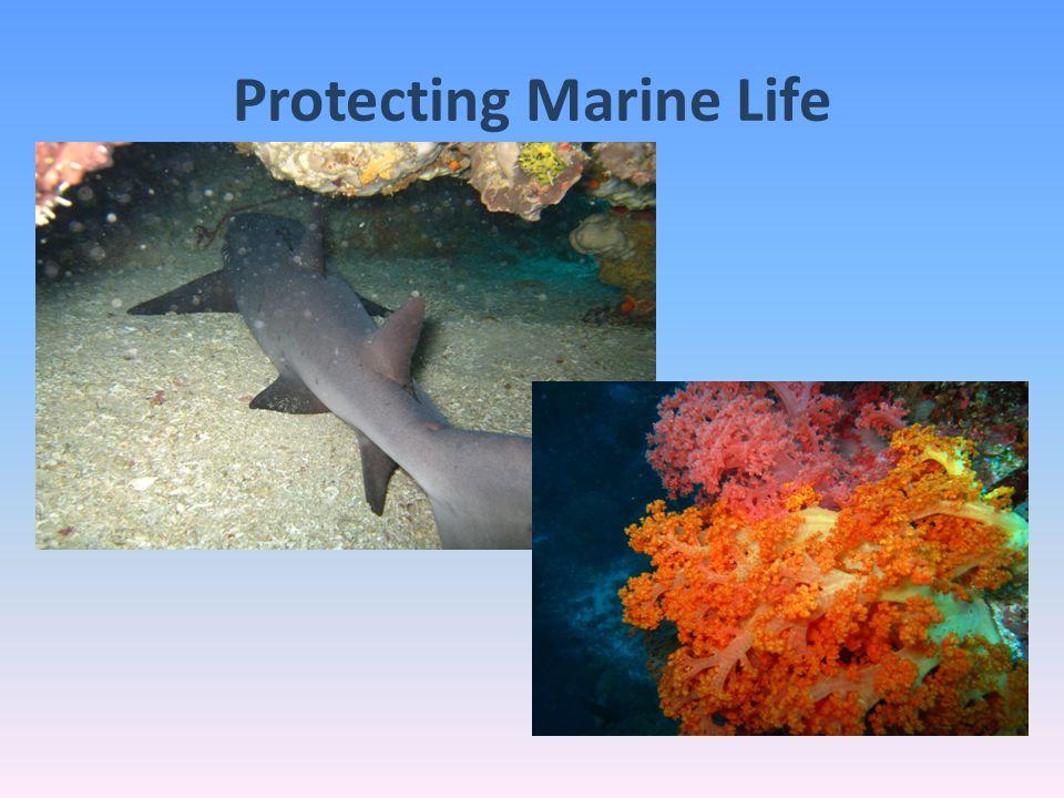 Protecting Marine Life