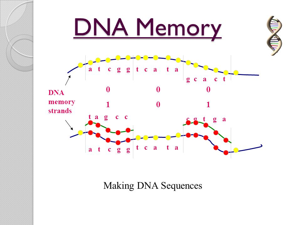DNA Memory DNA memory strands a t c g g t c a t a g c a c t 000 a t c g g t c a t a 101 t a g c c c g t g a Making DNA Sequences