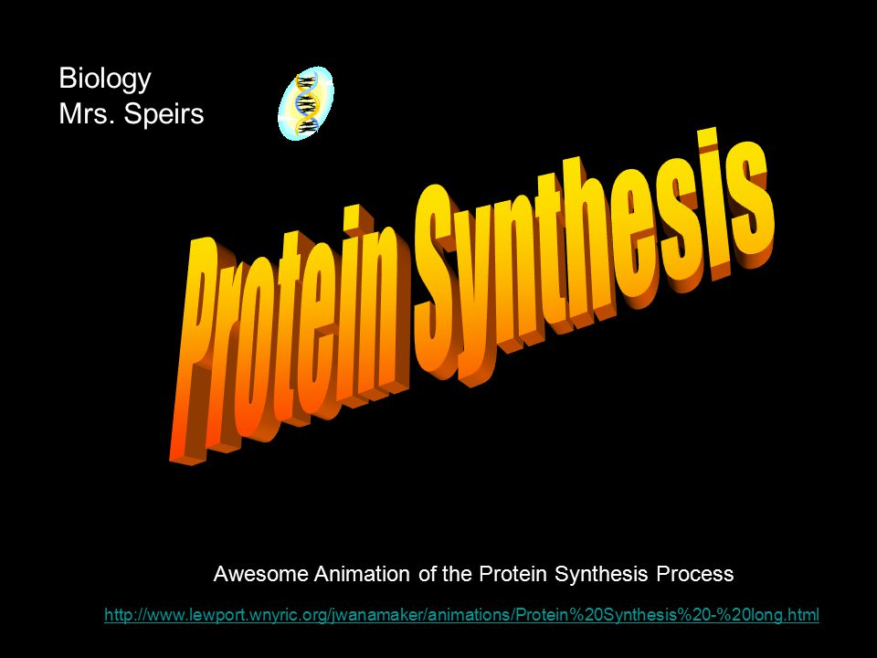 http://www.lewport.wnyric.org/jwanamaker/animations/Protein%20Synthesis%20-%20long.html Awesome Animation of the Protein Synthesis Process Biology Mrs