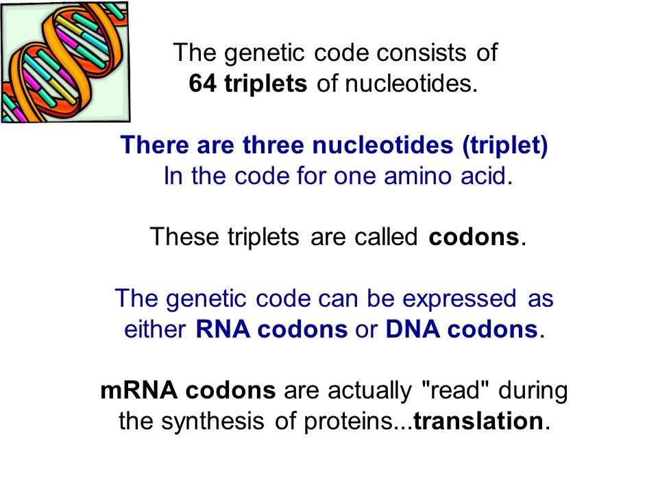 The genetic code consists of 64 triplets of nucleotides.