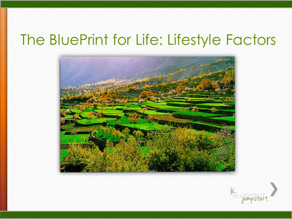 The BluePrint for Life: Lifestyle Factors
