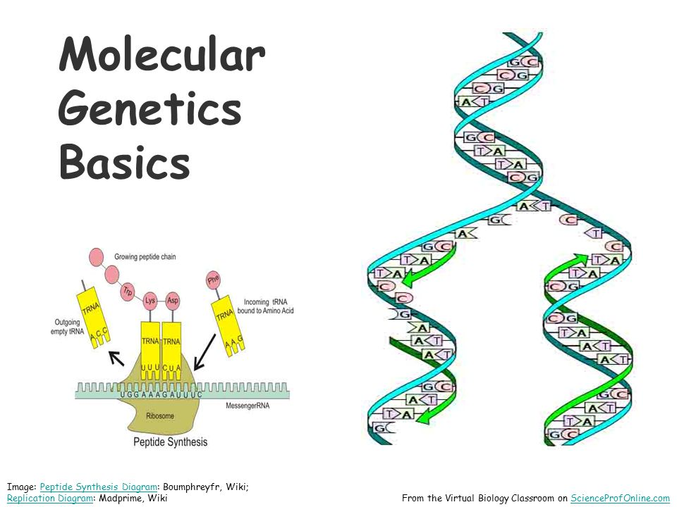 Prokaryotic Genomes Made of DNADNA Chromosomes can be circular or linear Genome floats freely within cytoplasm Q: Where is DNA found in prokaryotes.