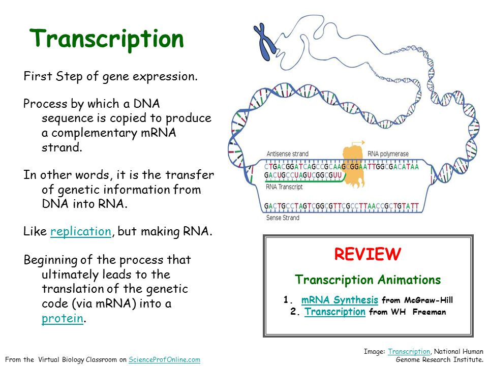 Transcription First Step of gene expression. Process by which a DNA sequence is copied to produce a complementary mRNA strand. In other words, it is t