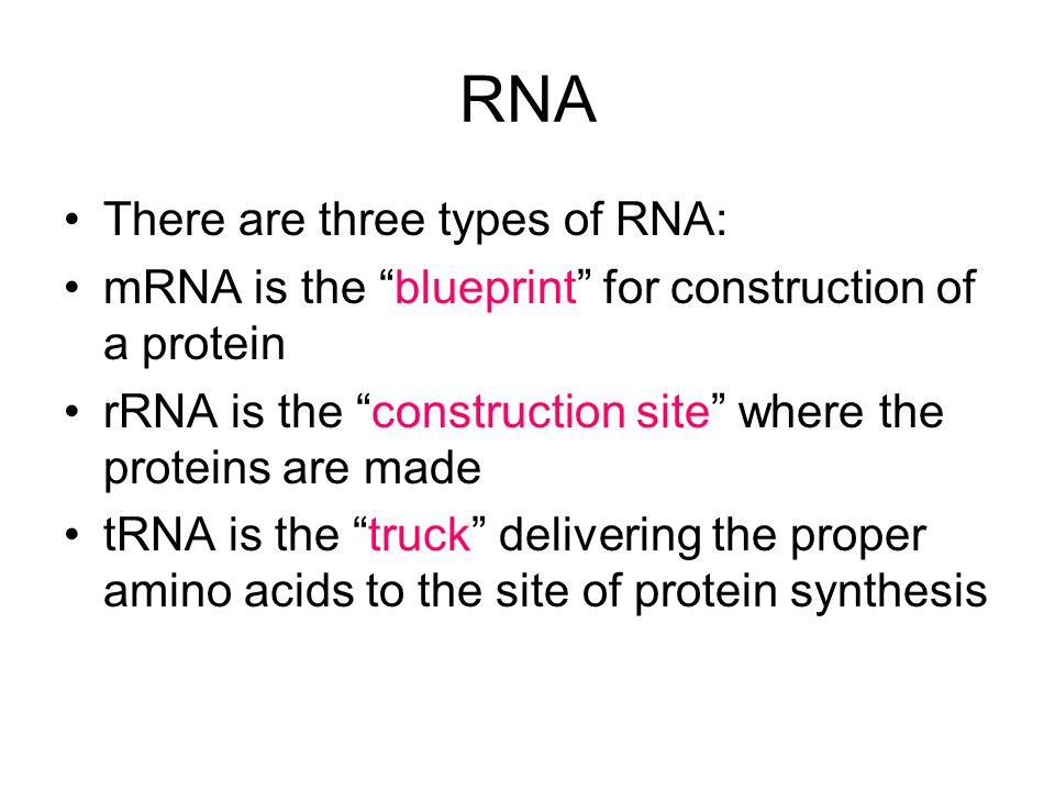 RNA There are three types of RNA: mRNA is the blueprint for construction of a protein rRNA is the construction site where the proteins are made tRNA is the truck delivering the proper amino acids to the site of protein synthesis