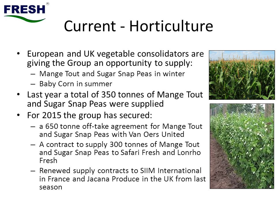 Current - Horticulture European and UK vegetable consolidators are giving the Group an opportunity to supply: – Mange Tout and Sugar Snap Peas in winter – Baby Corn in summer Last year a total of 350 tonnes of Mange Tout and Sugar Snap Peas were supplied For 2015 the group has secured: – a 650 tonne off-take agreement for Mange Tout and Sugar Snap Peas with Van Oers United – A contract to supply 300 tonnes of Mange Tout and Sugar Snap Peas to Safari Fresh and Lonrho Fresh – Renewed supply contracts to SIIM International in France and Jacana Produce in the UK from last season